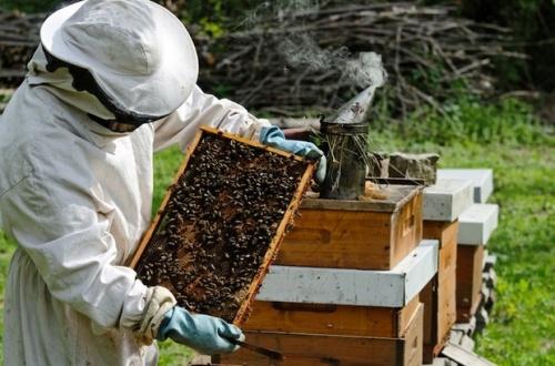 Пчеловодство идея сельской местности