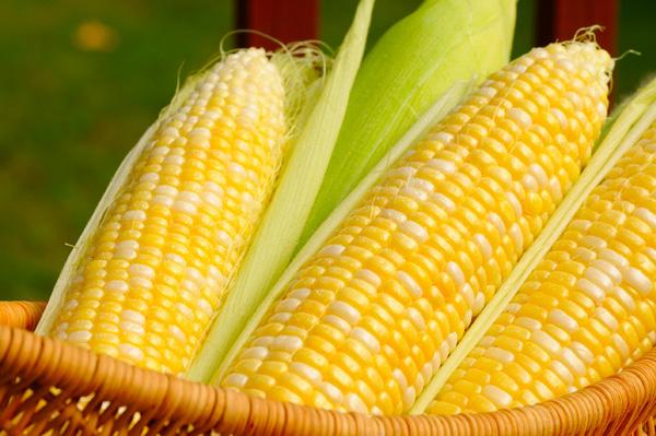 Бизнес план по продаже кукурузы