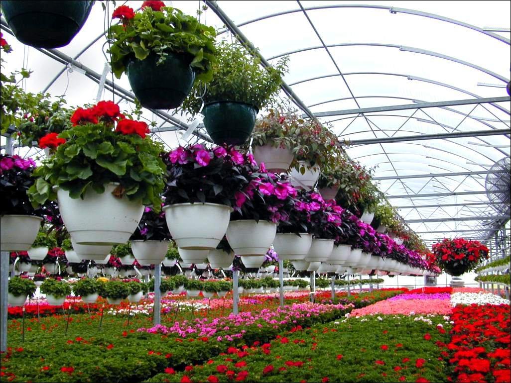Теплица для выращивания цветов