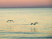Черном море в Евпатории